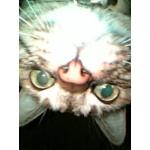 ネコのつぶやき