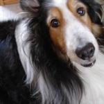 愛犬との日々