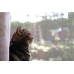 猫写真 : 大人猫の魅力♪