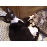 2匹の猫の暮らし