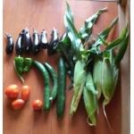 家庭菜園+a