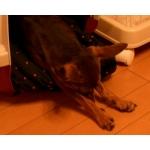 犬の防災対策