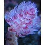 海水魚&サンゴ
