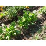 家庭菜園 園芸