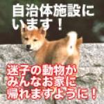 自治体保護犬猫情報
