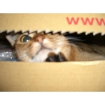 猫は箱が大好き。