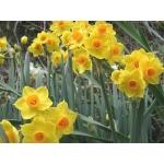 家の周りの 愛すべき 野草や花たち♪