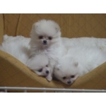 子犬の動画&子犬の写真