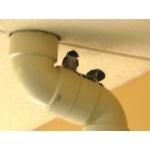 ツバメの巣日記