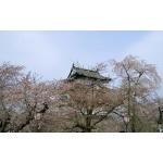 桜とねぷたと弘前城