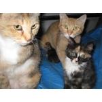 猫の保護・地域猫活動