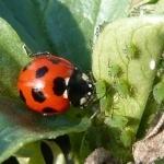 畑や水田の生き物たち、生物多様性