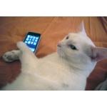 iphone奪取!