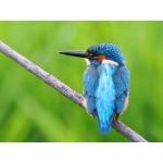 Nature's Birds 自然の中に生きる野鳥たち