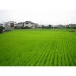 稲作り・田植え・田んぼ・畑・野菜づくり