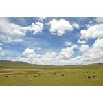 チベット音楽