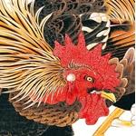 ニワトリ・日本鶏