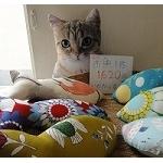 オリジナル猫グッズ・おもちゃ