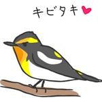 ゆる野鳥観察♪