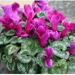 植木や花を育てる